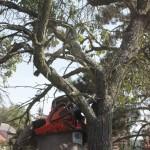 Michal na stromě