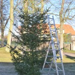 Vánoční strom ještě bez zdobení