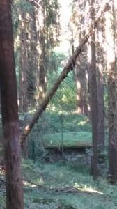 strom nad dráty k vodárně